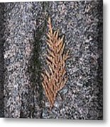 Cedar On Granite Metal Print