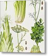 Celery - Fennel - Dill And Celeriac  Metal Print by Elizabeth Rice