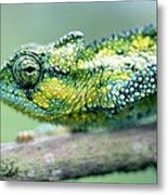 Chameleon In The Forests Of Mt Meru Metal Print