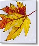 Changing Autumn Leaf In The Snow Metal Print