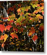 Changing Of The Colors Metal Print