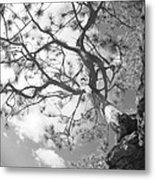 Charlie's Tree Metal Print by Artist Orange