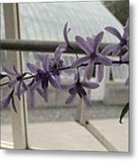 Charming Orchid  Metal Print