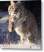 Chase In The Snow Metal Print