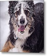 Chasing The Snow Metal Print by Joye Ardyn Durham