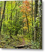 Chatooga Forest Trail Metal Print