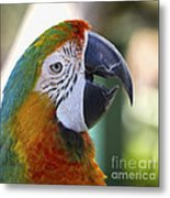 Chatty Macaw Metal Print