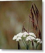 Cheatgrass And Common Yarrow Metal Print
