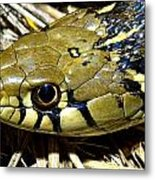 Checkered Garter Snakes Head Metal Print