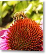 Checking For Pollen Metal Print