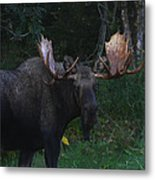 Checking You Out Metal Print