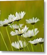 Cheerful Daisy Wildflowers Blowing In The Wind Metal Print