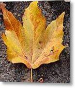 Cheerio Leaf Metal Print