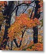 Cherohala Maple - D007676 Metal Print