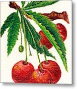 Cherries On A Branch Metal Print