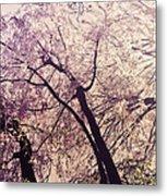 Cherry Blossoms - New York City Metal Print by Vivienne Gucwa