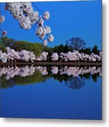 Cherry Blossoms And The Tidal Basin Metal Print