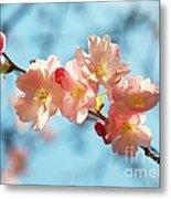 Cherry Blossoms IIi Metal Print