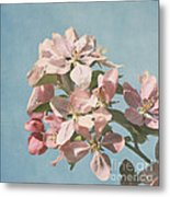 Cherry Blossoms Metal Print by Kim Hojnacki