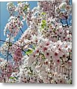 Cherry Blossoms Of The Sky Metal Print
