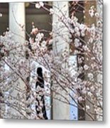 Cherry Blossoms Washington Dc 1 Metal Print