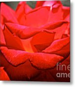 Cherry Red Rose Metal Print