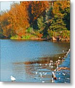 Chester In Autumn Metal Print