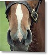 Chestnut Pony Foal Muzzle With Whiskers Metal Print