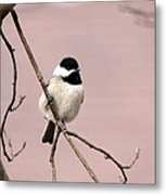 Chick In Pink Metal Print
