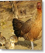 Chicken And Chicks Metal Print