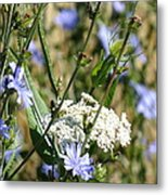 Chicory And Lace Metal Print
