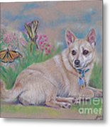 Chihuahua With Butterflies  Metal Print