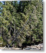 China Creek China Beach Juan De Fuca Provincial Park Bc Canada Metal Print by Andy Smy