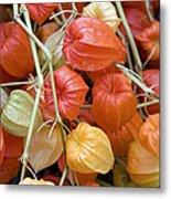 Chinese Lantern Flowers Metal Print