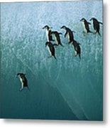 Chinstrap Penguin Pygoscelis Antarctica Metal Print