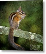 Chipmunk In The Forest Metal Print