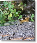 Chipmunk On A Log Metal Print