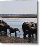 Chobe Elephants Metal Print