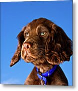 Chocolate Brown Cocker Spaniel Puppy Metal Print