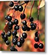 Chokecherry Metal Print