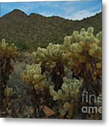 Cholla On The Mountainside Metal Print