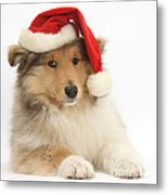Christmas Collie Pup Metal Print