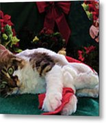 Christmas Joy W Kitty Cat - Kitten W Large Eyes Daydreaming About Xmas Gifts - Framed W Poinsettias Metal Print