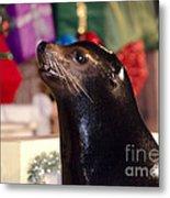 Christmas Sea Lion Metal Print