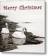 Christmas Swans 2367 Metal Print