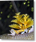 Christmas Tree Worm In Raja Ampat Metal Print