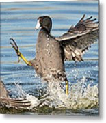 Churning Up The Water Metal Print