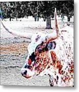 Cibolo Ranch Steer Metal Print