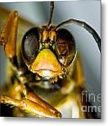 Cicada Killer Metal Print