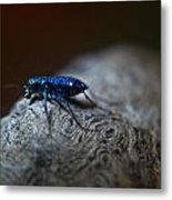 Cicindellidae A Family Of Preditors Metal Print
